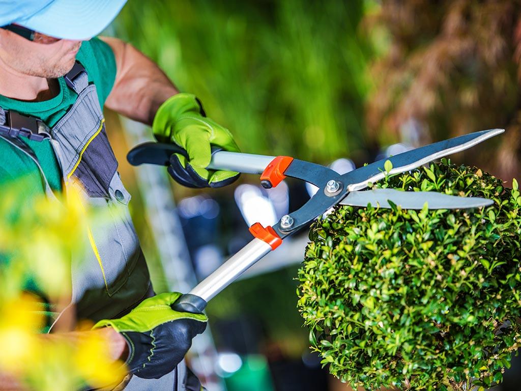mantenimiento de jardines alicante