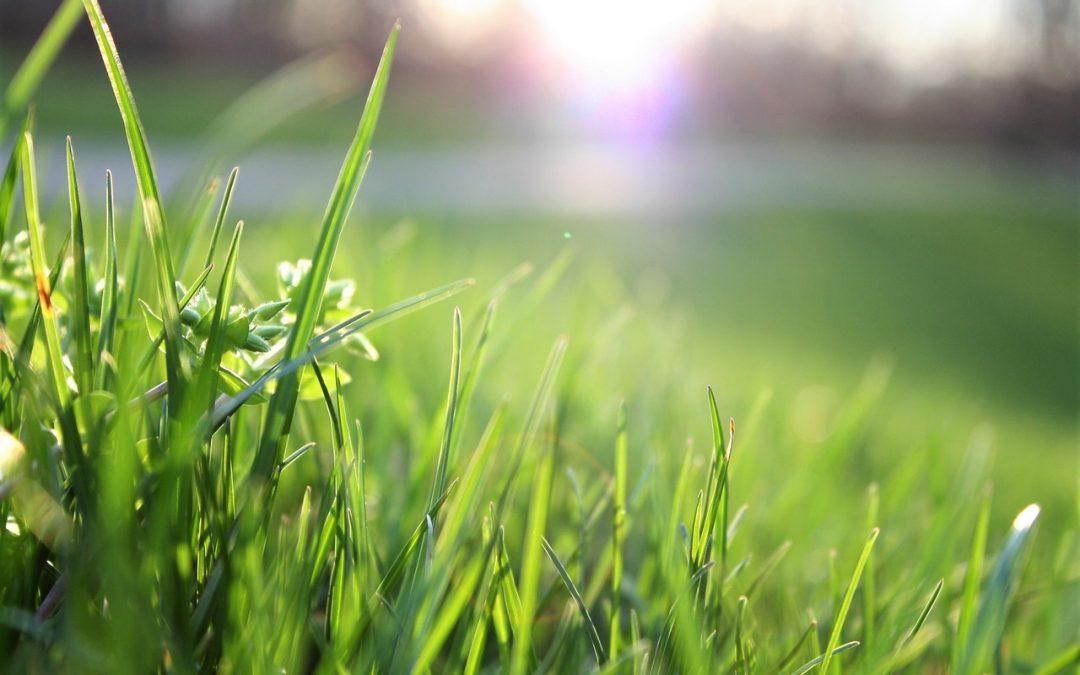 Cuida tu jardín después del desgaste del verano